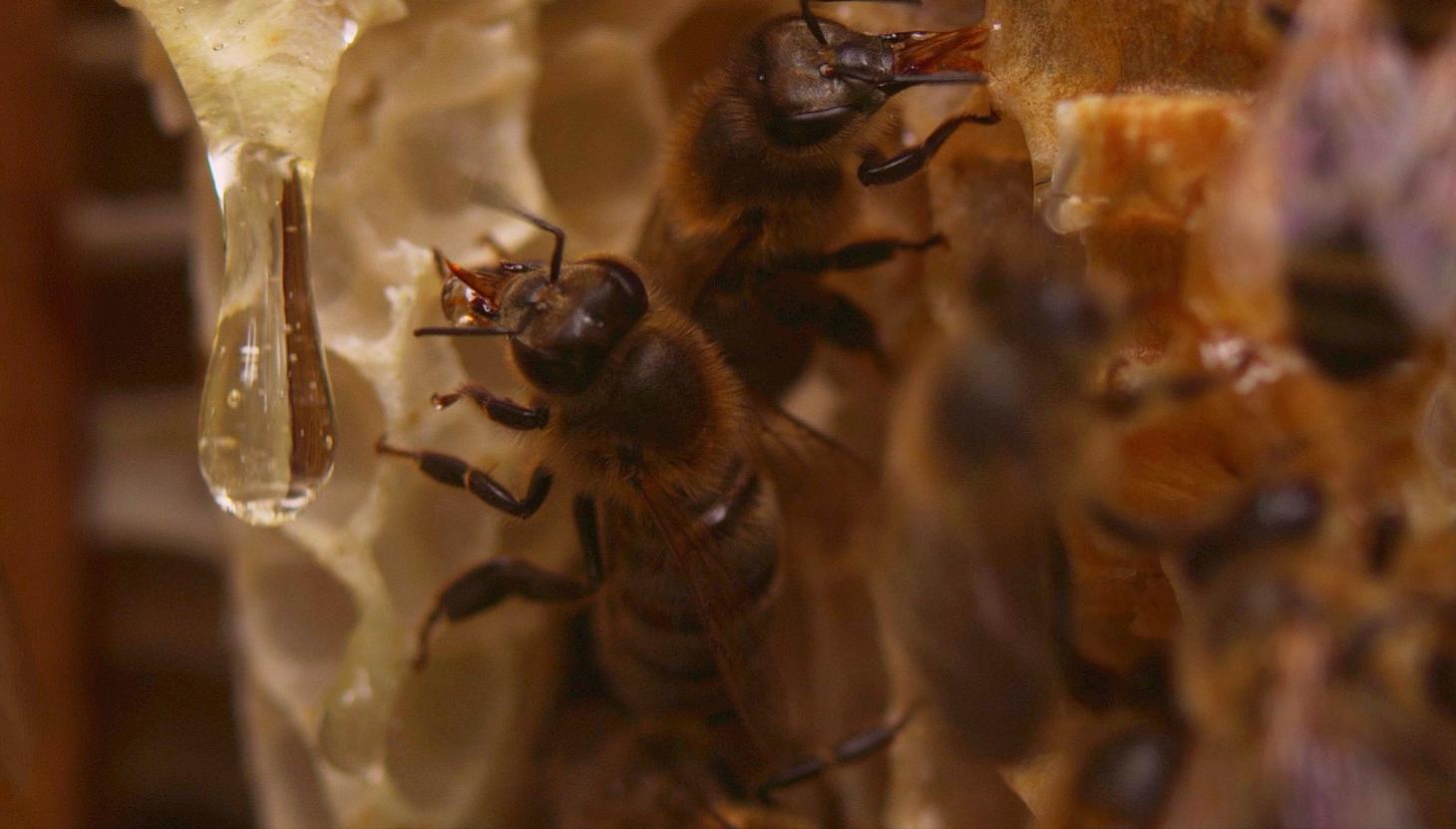 Картинки пчелка майя и вилли ищете прозрачные